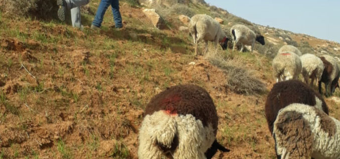Private agricultural land encroached by settlers in the town of Bani Nai'm, south of Hebron