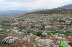 The Occupation Uproots Tens of Saplings in Khirbet 'Einun \ Tubas Governorate