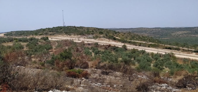 Israeli Occupation Forces torch 103 olive trees in Jenin governorate