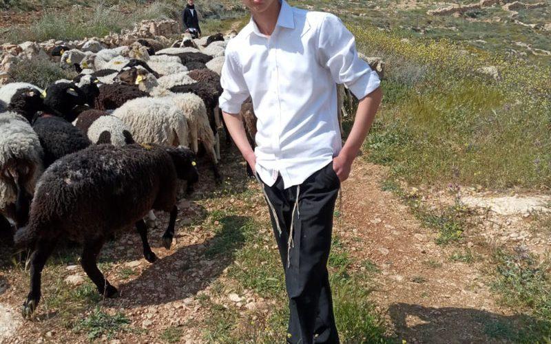 مستعمرون يقتلعون أشتال حرجية شرق بلدة الشيوخ بمحافظة الخليل