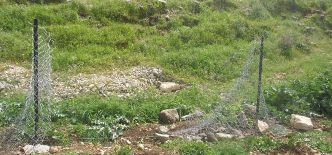 Colonists gangs uproot Almond Saplings and Destroy a Siege in Deir Nitham / Ramallah governorate