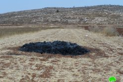 'Adei Ad colonists set fire to a Wheat Field in Al-Mughayyir village/ Ramallah Governorate