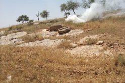 مستعمرون ينفذون اعتداءات على قريتي التواني والمفقرة بمسافر يطا جنوب الخليل