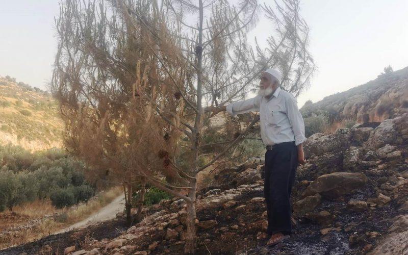 مستعمرون يحرقون أشجار زيتون ويعتدون على أراضي المواطنين في قرية الريحية جنوب الخليل
