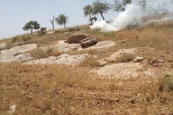 Colonists Are Carrying Out Attacks in At-Tawani and Al-Mufqara villages in Masafer Yatta / South Hebron