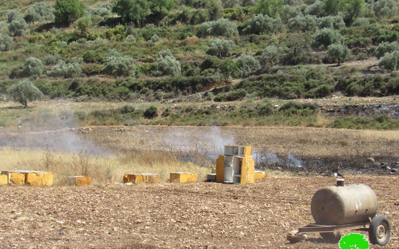 The Occupation Forces Set flames to Wheat Fields in Immatain village / Qalqilya Governorate