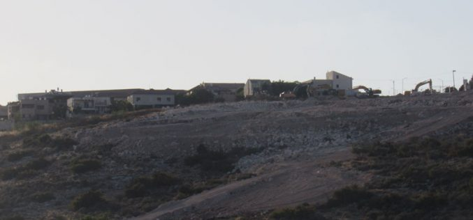 Tzufim Colonists Ravage Lands in Jayyous village / Qalqilya Governorate
