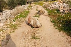 Ravaging Vast Areas of Postures in Khallet Hassan/ Salfit Governorate