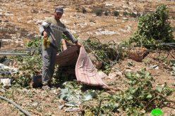 الاحتلال يجرف قطعة أرض ويقتلع المزرعات منها في واد السمن جنوب الخليل