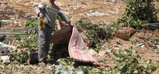 The Israeli Occupation Ravages a Plot in Wad As-Samn south Hebron