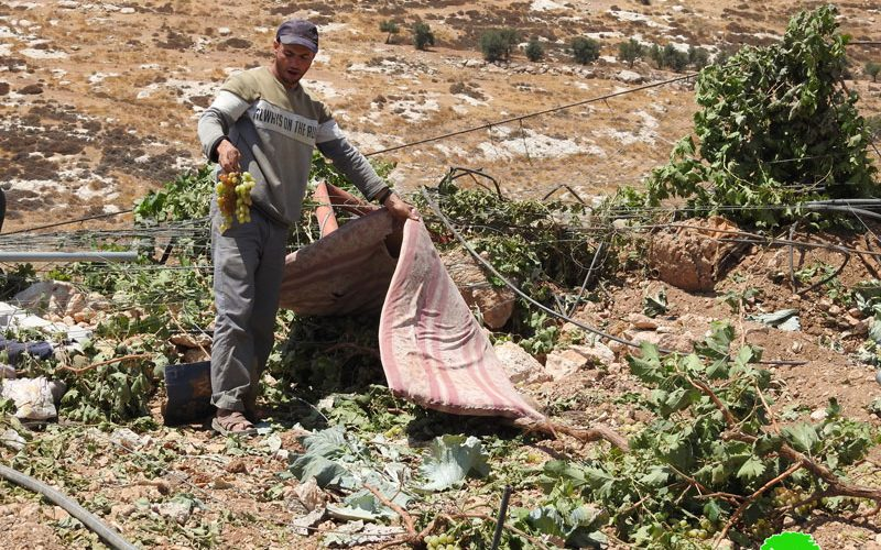 الاحتلال يجرف قطعة أرض ويقتلع المزروعات منها في واد السمن جنوب الخليل