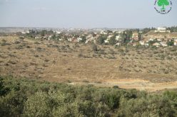 Immanuel Colony Expands on Jinsafut village lands / Qalqilya governorate